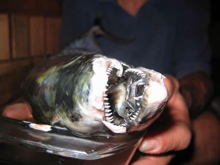 Carlo trabatti andar sott 39 acqua che for Cucinare dentice